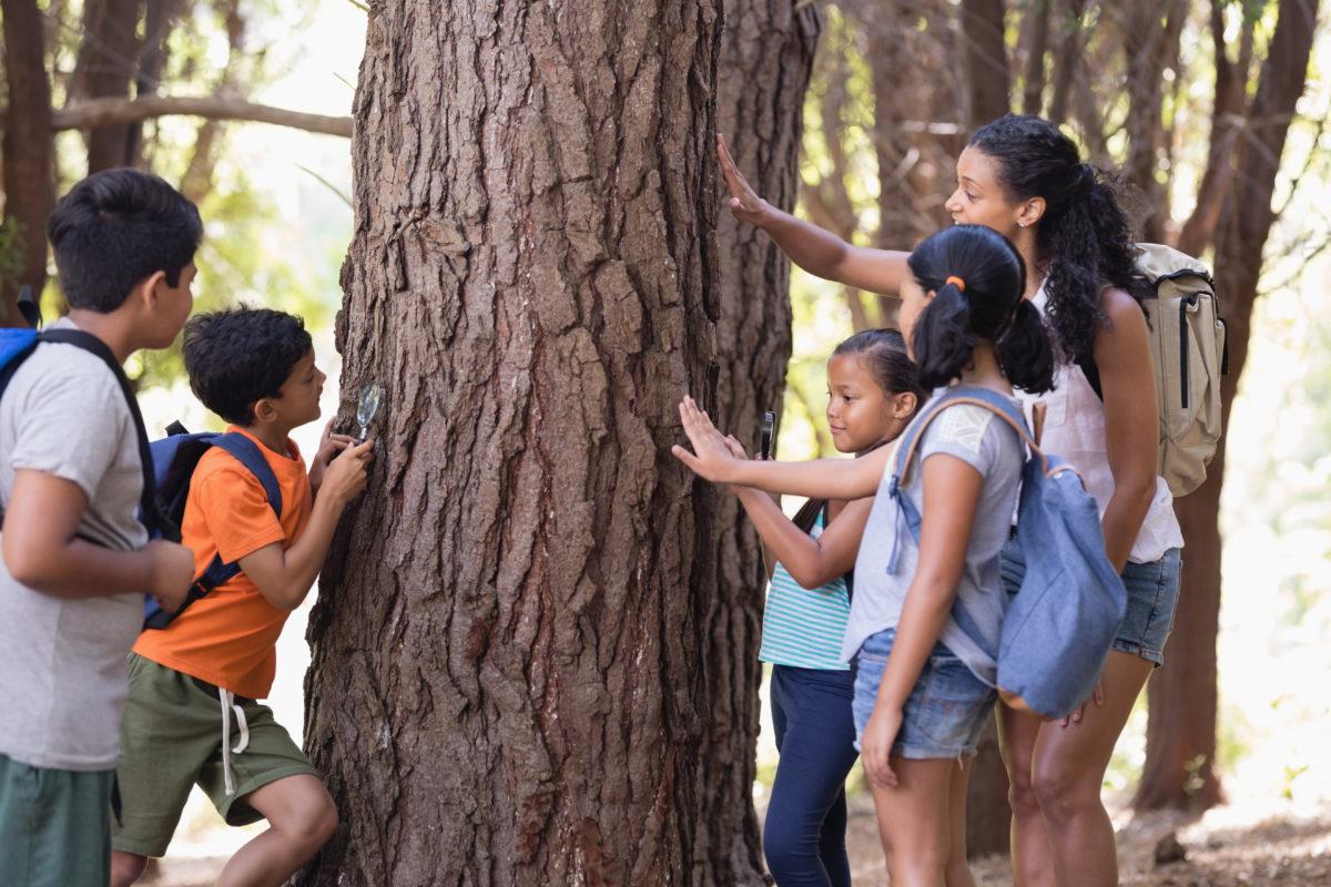 Giocoleria e alberi